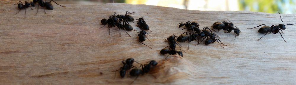 Bionomic Pest Solutions             (401) 261-7240